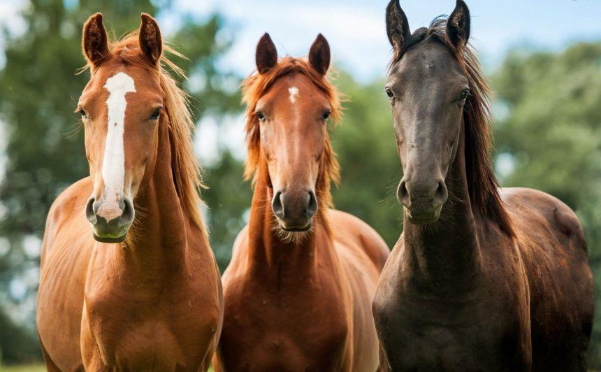 Ξεκίνησε το πρόγραμμα ενδυνάμωσης των ιπποδρομιών από την Ιπποδρομίες ΑΕ, διατέθηκαν οι πρώτοι ίπποι