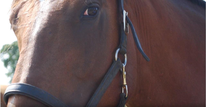 horse-eye-ekkinisi-eidiseis.jpg