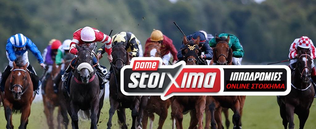 Horse-homepage-11.jpg